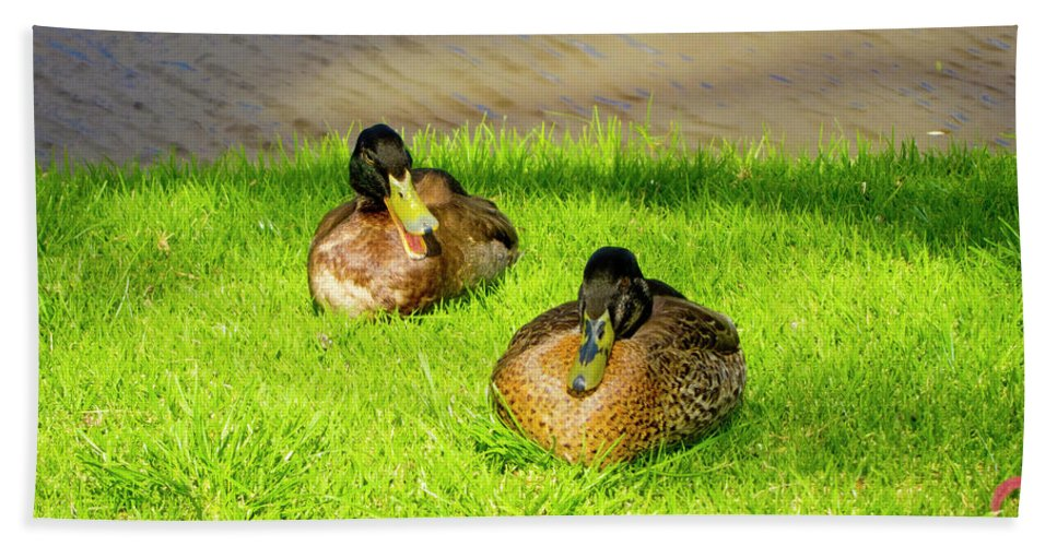 Ducks Beach Towel featuring the photograph What Do You Mean-i Talk Too Much by Douglas Barnard