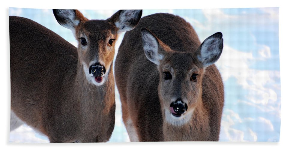 Deer Beach Towel featuring the photograph What Do You Say by Lori Tambakis
