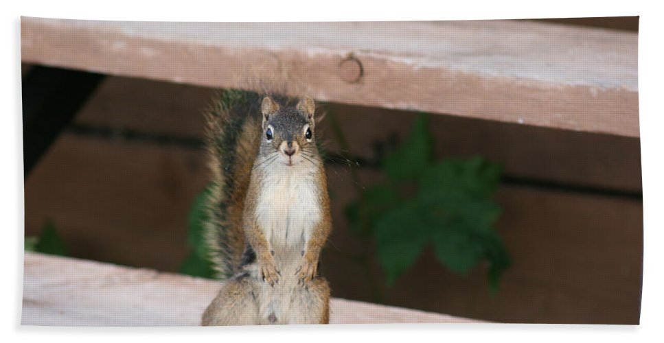 Squirrel Mother Nature Wild Animal Cute Dancing Beach Towel featuring the photograph What You Lookin At by Andrea Lawrence