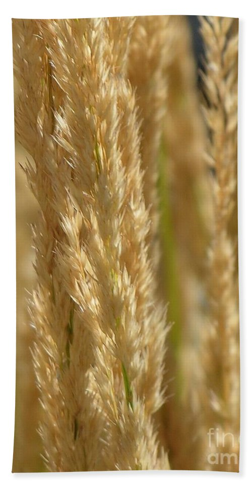 Wheat Beach Towel featuring the photograph Wheat Stalks by Diane Greco-Lesser