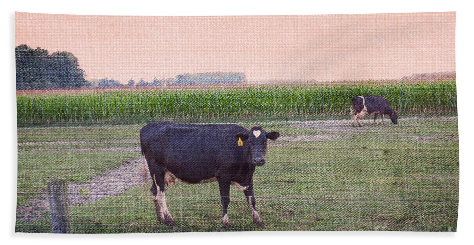 Cow Beach Towel featuring the photograph When I Finish My Dinner I'll Deal With You by Paulette B Wright