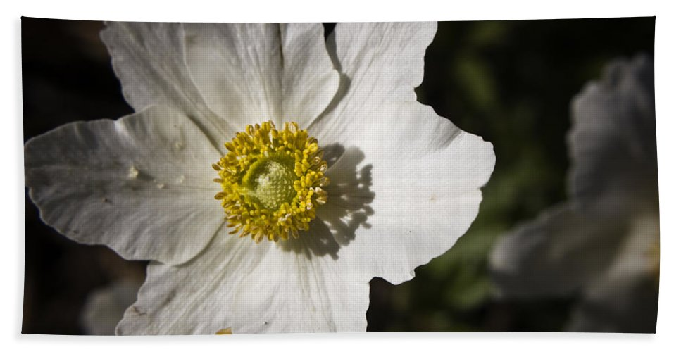 Flower Beach Towel featuring the photograph White Anemone by Teresa Mucha