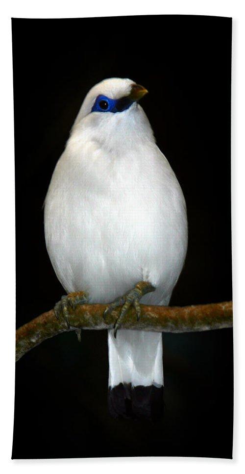Bird Beach Sheet featuring the photograph White Bird by Anthony Jones