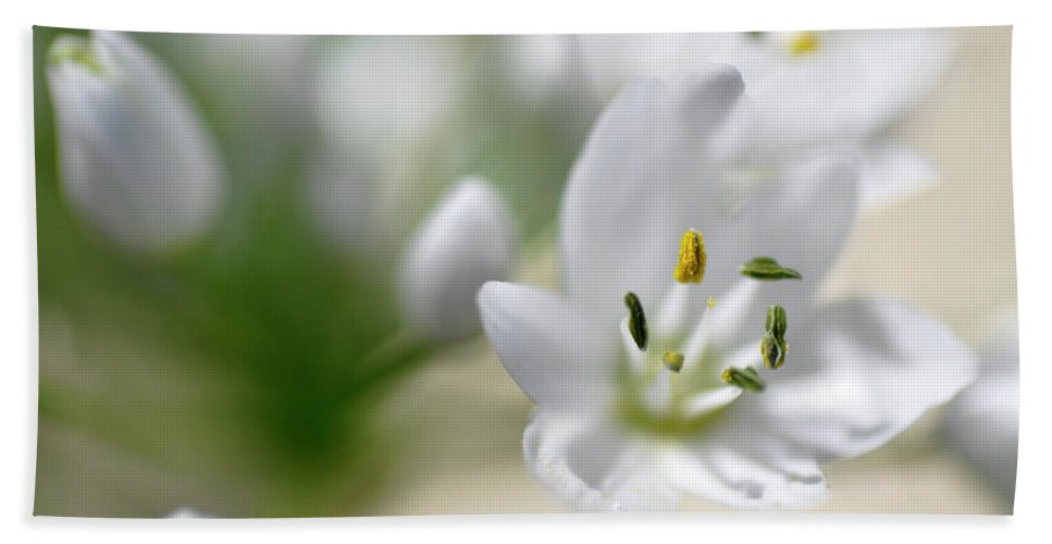 Lachish Beach Towel featuring the photograph White Blossom 2 by Dubi Roman