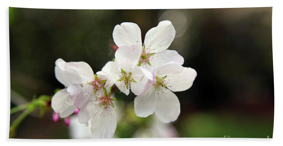 Flowers Beach Towel featuring the photograph White Blossom by Dean Triolo