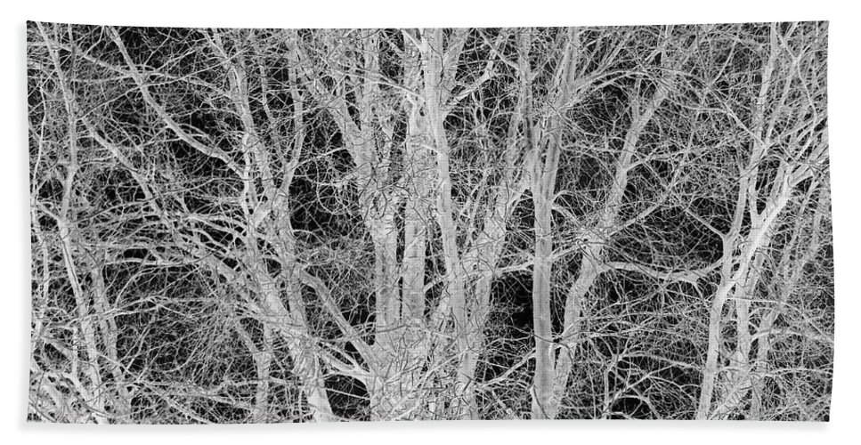 Black And White Beach Towel featuring the digital art White Branches by Munir Alawi