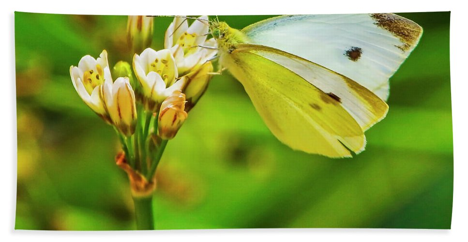 White Butterfly Beach Towel featuring the photograph White Butterfly by Edita De Lima
