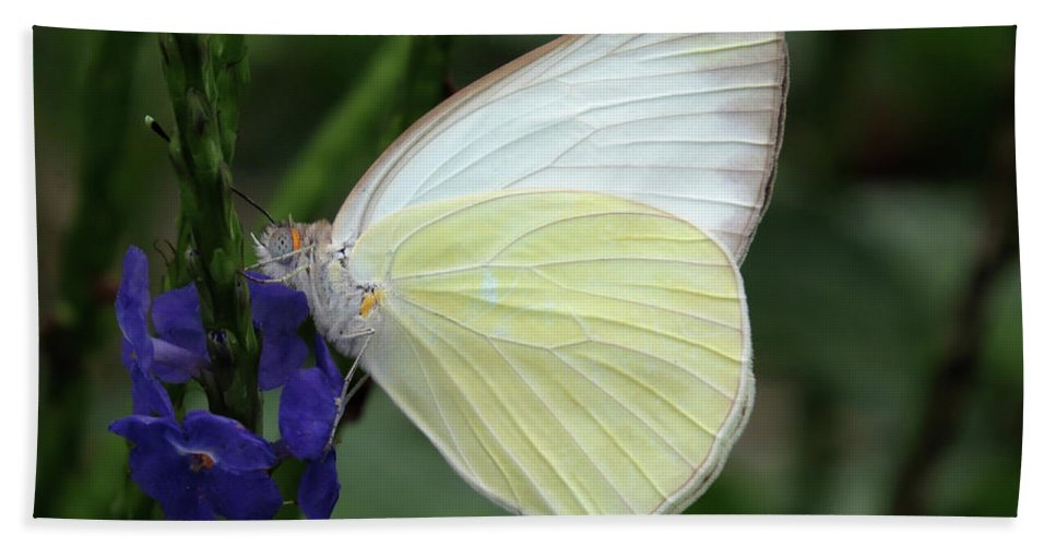 White Butterfly Beach Towel featuring the photograph White Butterfly by Zina Stromberg