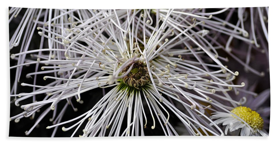 Clay Beach Towel featuring the photograph White Flora by Clayton Bruster