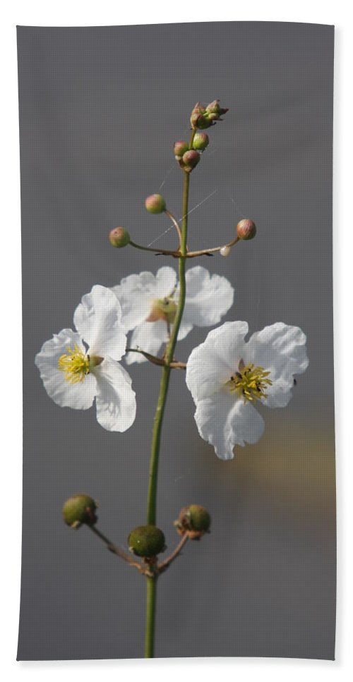 Flowers Beach Towel featuring the photograph White Flower by Christiane Schulze Art And Photography