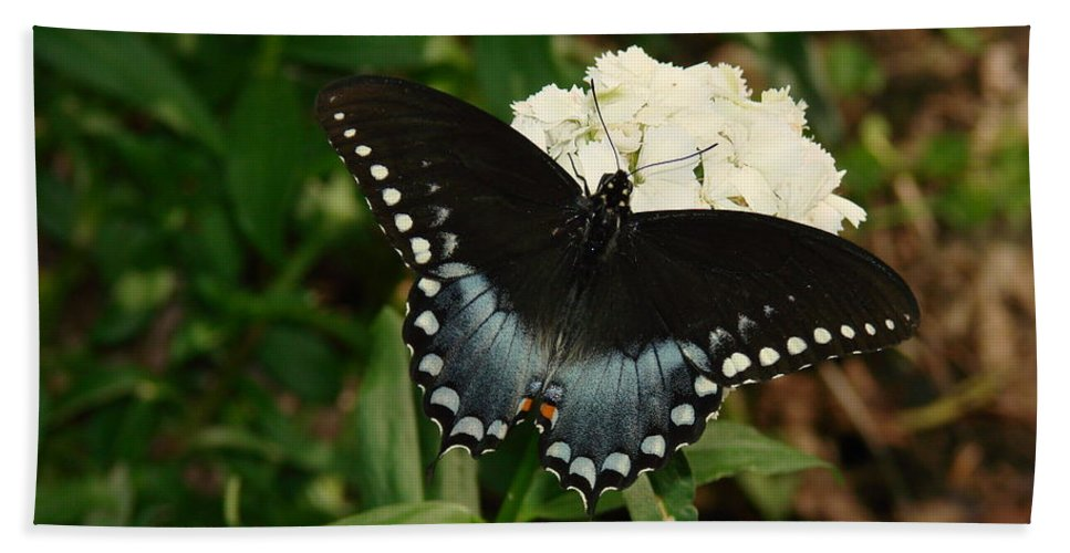 Nature Beach Towel featuring the photograph White Flowered Butterfly by Mary Halpin