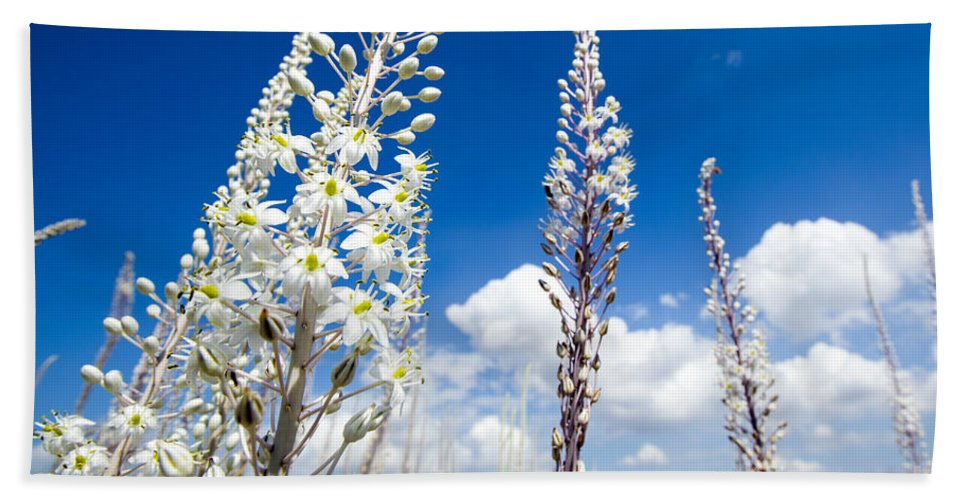 Freshness Beach Towel featuring the photograph White Flowering Sea Squill On A Blue Sky by Alon Meir