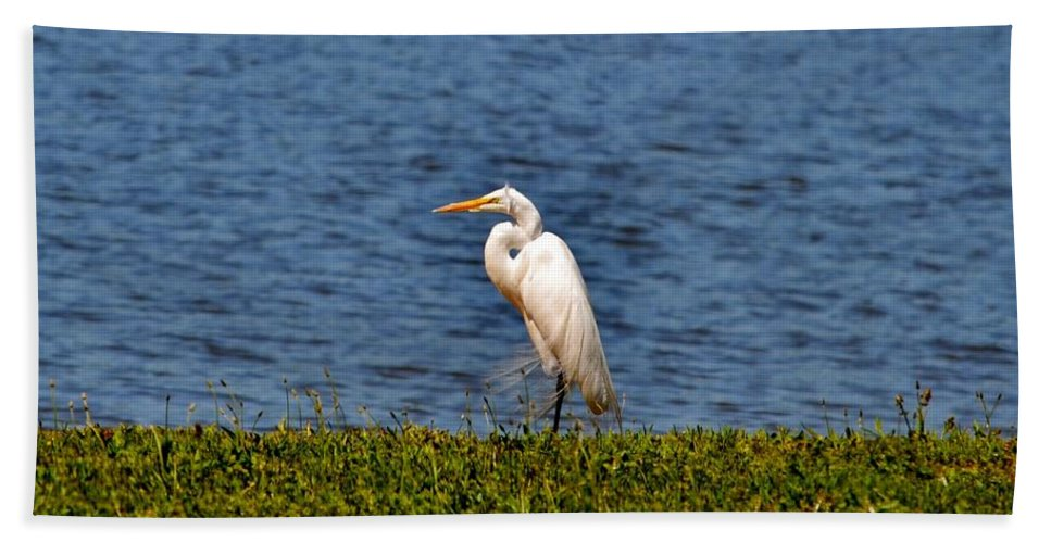 Heron Beach Towel featuring the photograph White Heron by Eileen Brymer