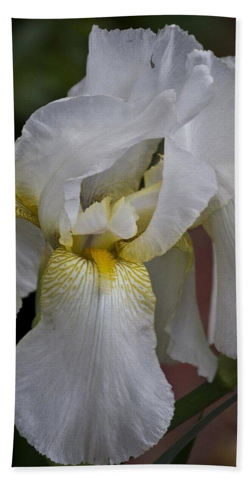 White Beach Towel featuring the photograph White Iris by Teresa Mucha
