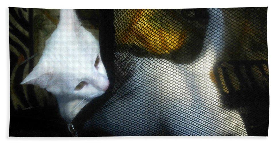 Kitten Beach Towel featuring the painting White Kitten by David Lee Thompson