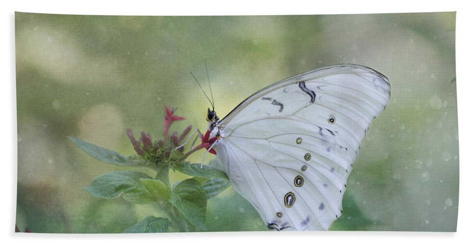 Butterfly Beach Towel featuring the photograph White Morpho Butterfly by Kim Hojnacki