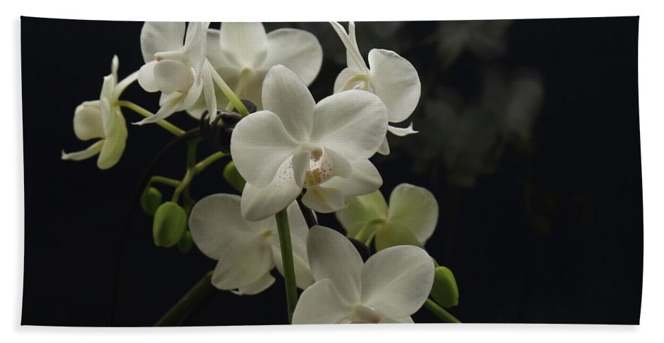 White Orchid Beach Towel featuring the photograph White Orchid And Reflection by Jeff Townsend