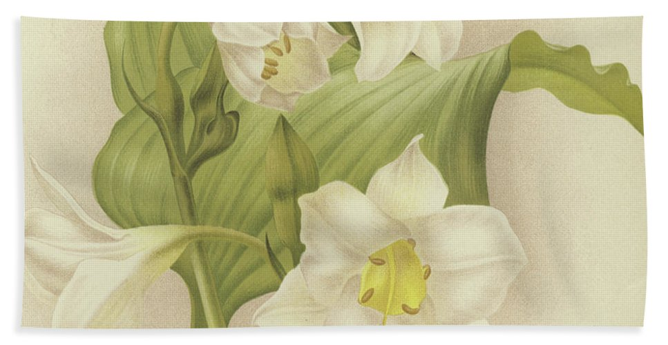 Orchid Beach Towel featuring the painting White Orchids  Eucharis Sanderiana by English School