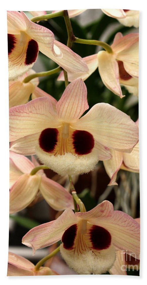 Flowers Beach Towel featuring the photograph White Orchids With A Hint Of Pink by Carol Groenen