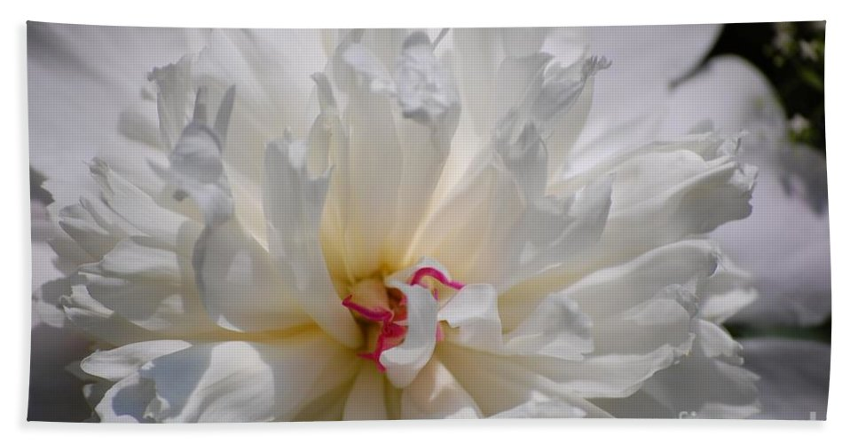 Digital Photography Beach Towel featuring the photograph White Peony by David Lane