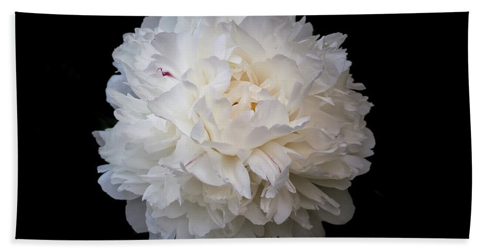 White Peony Flower On The Black Background Beach Towel featuring the photograph White Peony Flower by Yana Reint