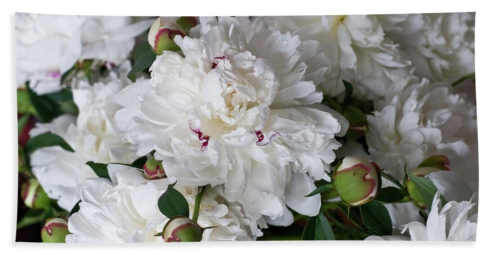 Flower Beach Towel featuring the photograph White Peony With Red Traces by Michael Bessler