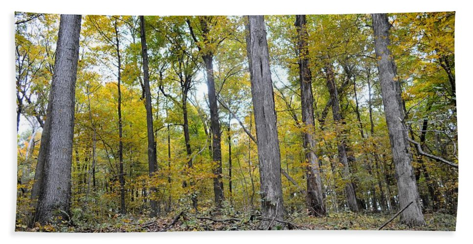 Forest Beach Towel featuring the photograph White Pine Hollow by Bonfire Photography