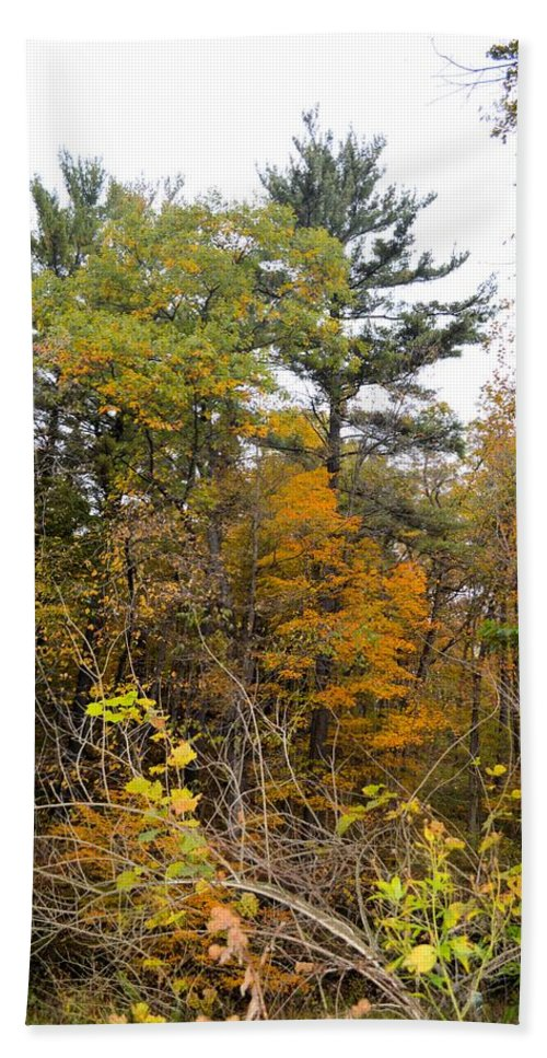Forest Beach Towel featuring the photograph White Pine Hollow State Forest by Bonfire Photography