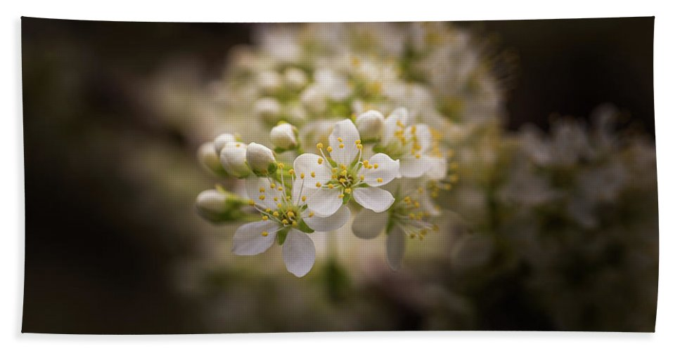 Plum Beach Towel featuring the photograph White Plum Blossom- 2 by Calazone's Flics