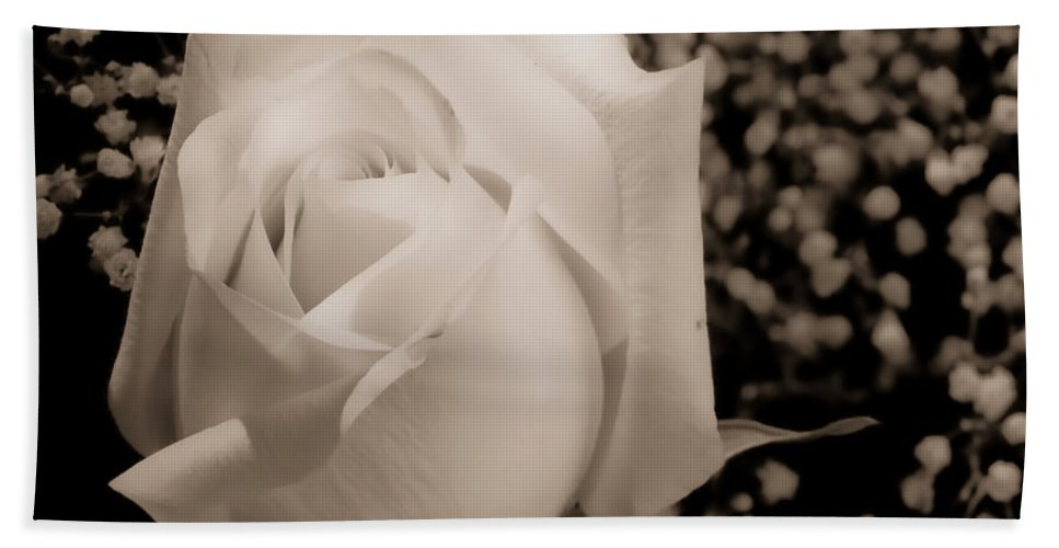 Flowers Beach Towel featuring the photograph White Rose Bw Fine Art Photography Print by James BO Insogna