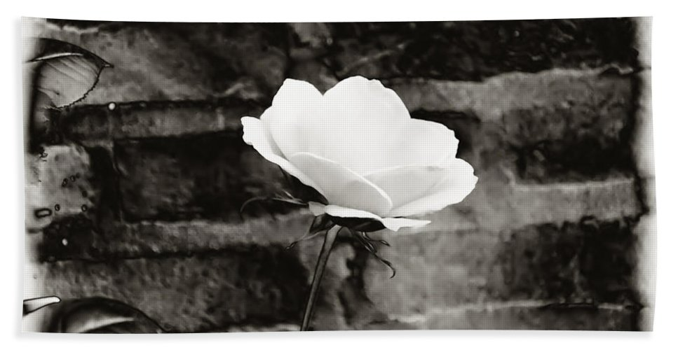 Brick Wall Beach Towel featuring the photograph White Rose In Black And White by Bill Cannon