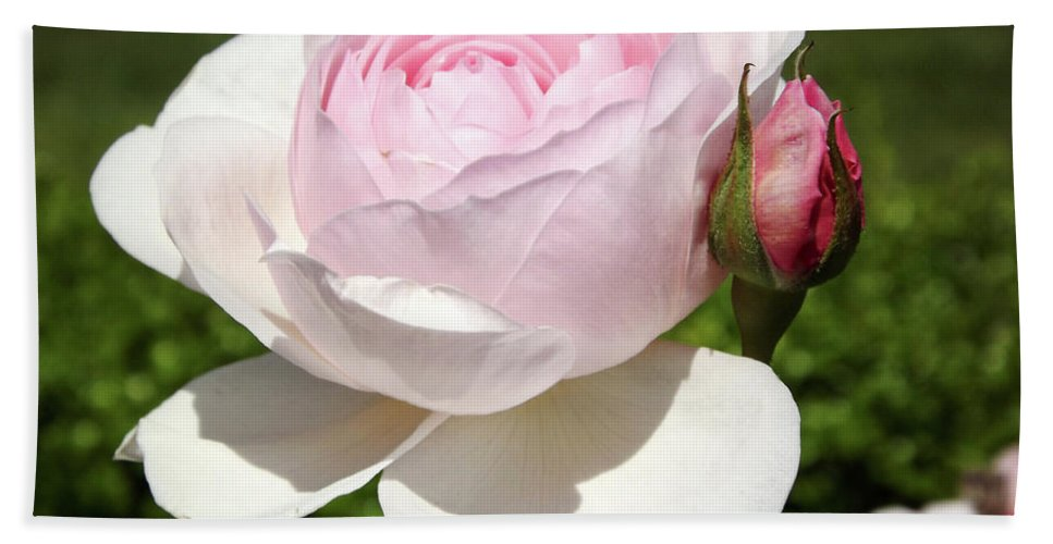 White Rose Photographs Beach Towel featuring the photograph White Rose by Lourry Legarde