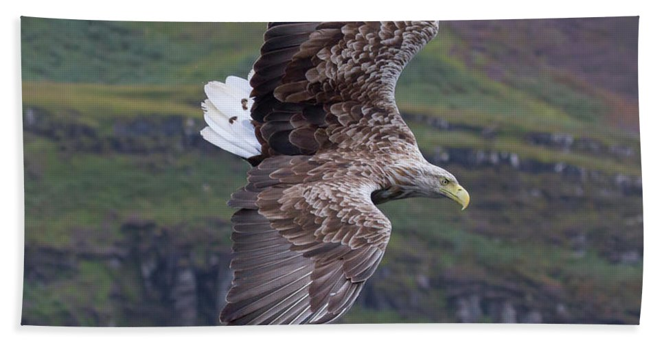 White-tailed Eagle Beach Towel featuring the photograph White-tailed Eagle Banks by Peter Walkden