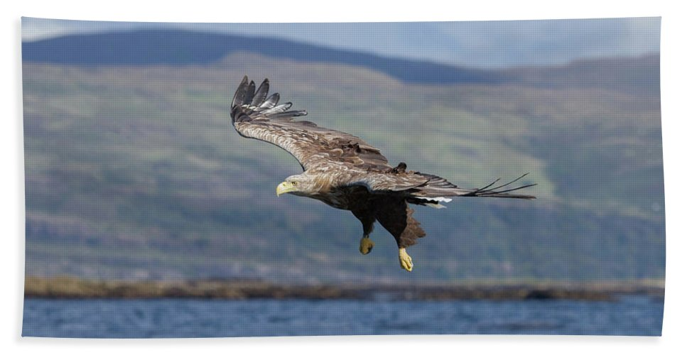White-tailed Eagle Beach Towel featuring the photograph White-tailed Eagle Over Loch by Peter Walkden