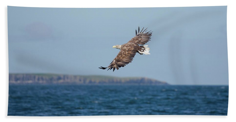 White-tailed Eagle Beach Towel featuring the photograph White-tailed Eagle Over The Sea by Peter Walkden