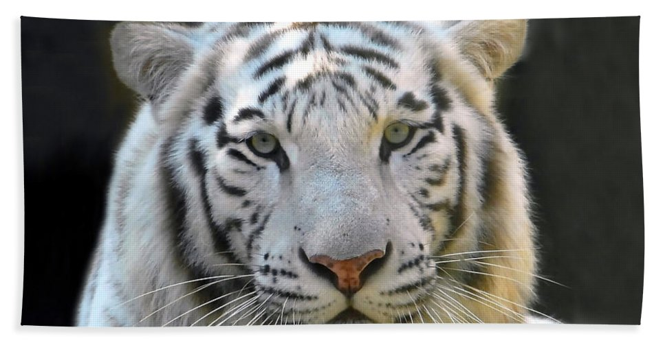 White Tiger Beach Towel featuring the photograph White Tiger by David Lee Thompson
