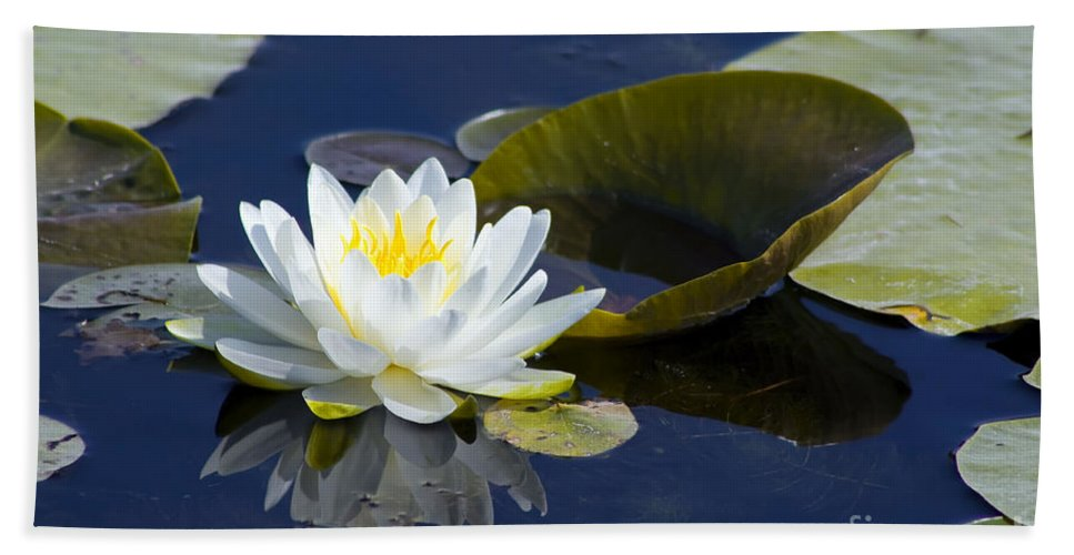 Flower Beach Towel featuring the photograph White Waterlily by Teresa Zieba