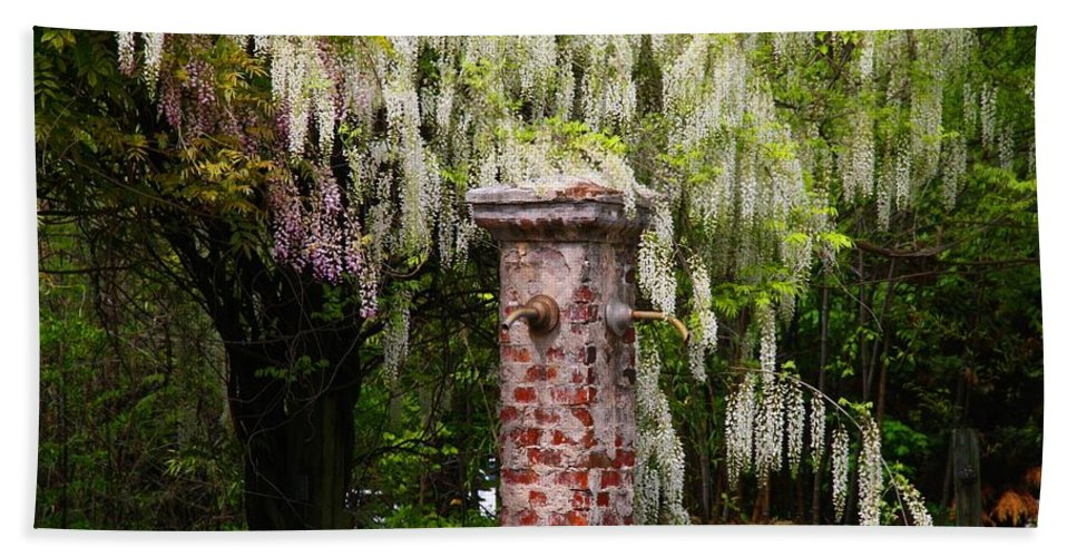 Garden Beach Towel featuring the photograph White Wisteria by Kathryn Meyer