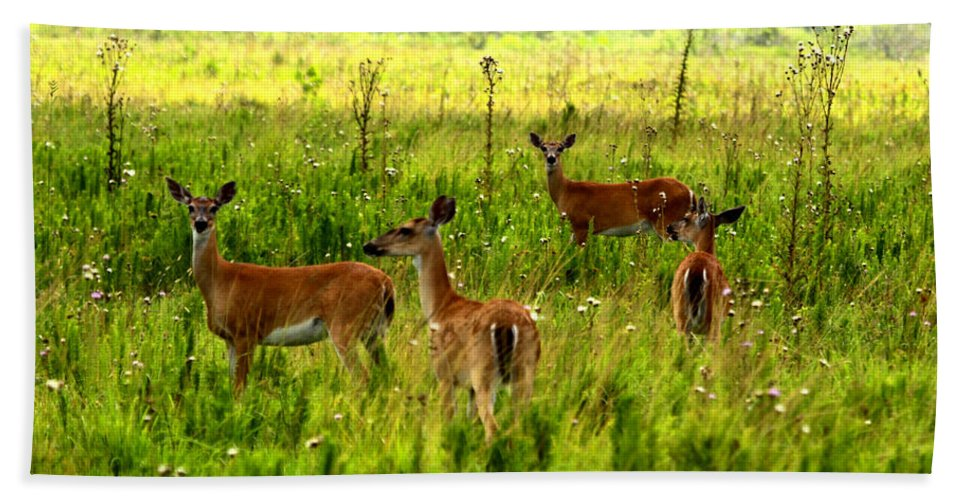 Whitetail Deer Beach Towel featuring the photograph Whitetail Deer Family by Barbara Bowen
