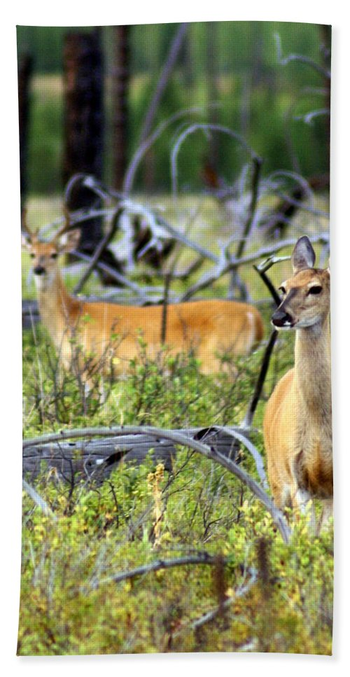 Deer Beach Towel featuring the photograph Whitetails by Marty Koch