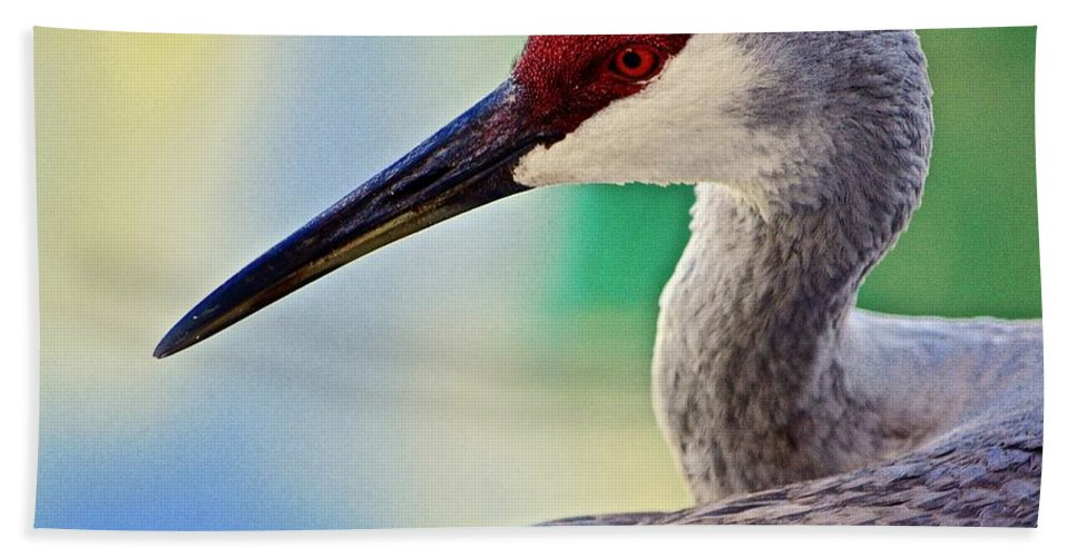 Sandhill Crane Beach Towel featuring the photograph Who Is Out There? by Andrea Spritzer