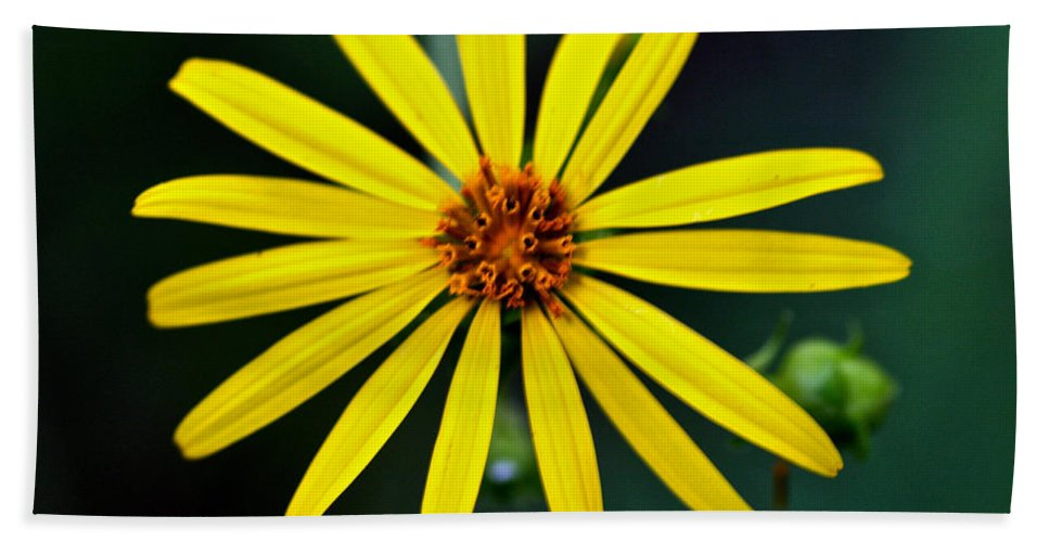 Rosinweed Beach Towel featuring the photograph Whorled Rosinweed by Jack R Perry