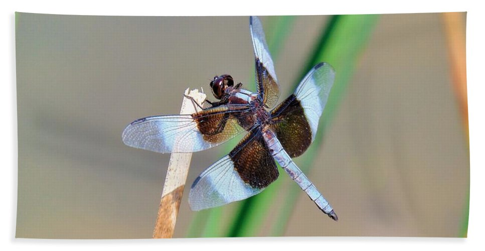 Dragonfly Beach Towel featuring the photograph Widow Skimmer by Carl Miller
