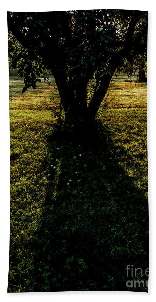 Apple Tree Beach Towel featuring the photograph Wild Apple Tree 1 by James Aiken
