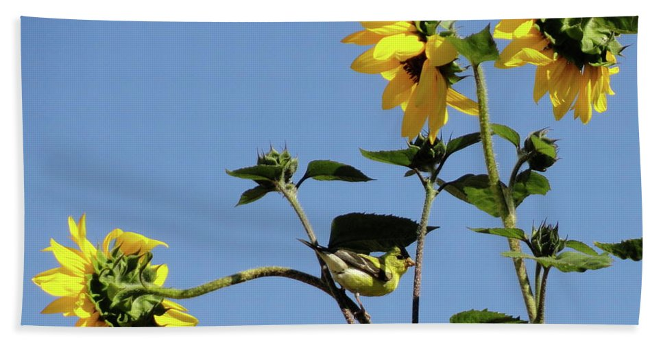 Canary Beach Towel featuring the photograph Wild Canary Sunflowers by Shannon Grissom