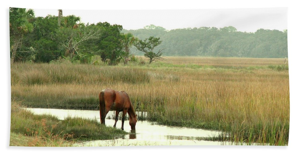 Nature Beach Towel featuring the photograph Wild Horse In Saltmarsh by Peg Urban