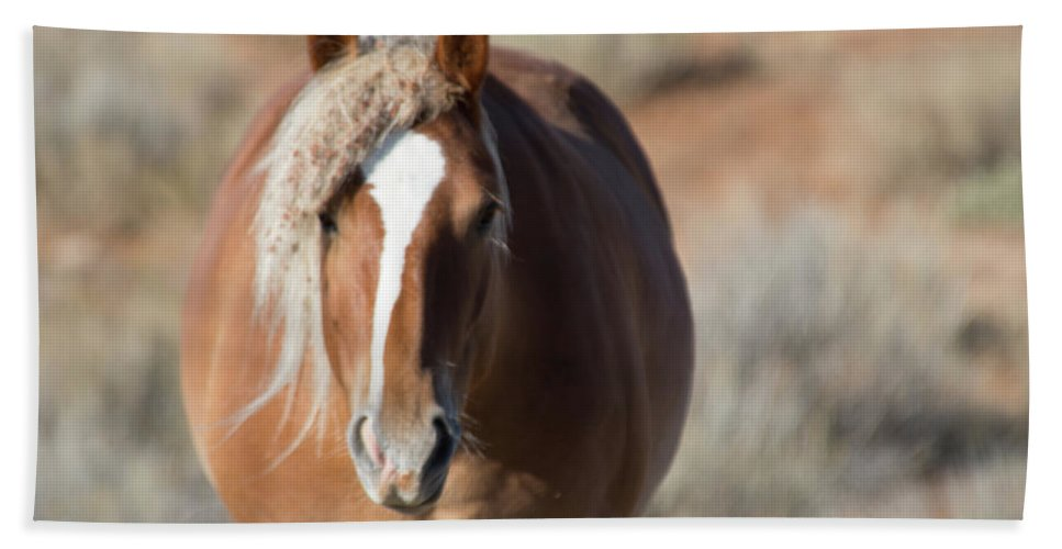 Cody Beach Towel featuring the photograph Wild Horses of Park County Wyoming by Frank Madia