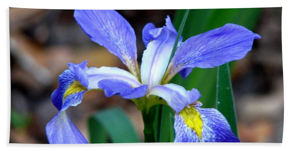 Iris Beach Towel featuring the photograph Wild Iris 3 by J M Farris Photography