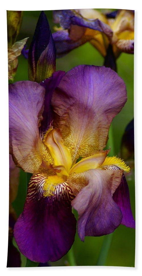 Nature Beach Towel featuring the photograph Wild Iris by Ben Upham III