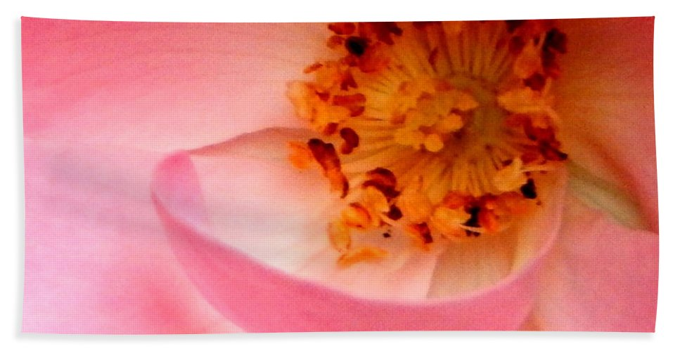 Pink Beach Towel featuring the photograph Wild Rose Bowl by JoAnne Burgess